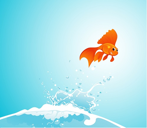 beauty goldfish jump out of water